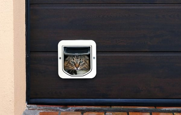 Cat Flap Buyers Guide